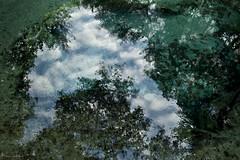 The Secret Spring (paulgarf53) Tags: spring water ocalanationalforest nature topaz topazstudio2 nkon d700 florida