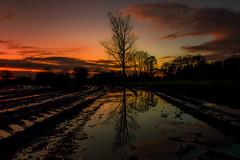 Landscape-0787 (EB_Creation) Tags: tree sunset clouds amateur amazing landscape evening water walkinginnature nature nikkor reflection reflections nikon nikond7500 nikon1680mm nikkor1680mmf284evr 1680284eifedvr 1680mm d7500 beautiful lovely naturelovers
