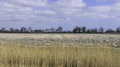 Landschap langs de Pieterbuurstermaar (Photographer Simon) Tags: simonvanderplas pieterburen pieterpad groningen nederland pieterbuurstermaar landschap wolken bomen boerderijen aarde akker riet