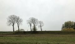 Polder bij Oude- Tonge (Fijgje On/Off) Tags: polder bomen trees kassen dijk dyke greenhouses gras grass fijgje appleiphone8 iphone8backcamera399mmf18 nov2019 jan2020 oudetonge goereeoverflakkee zuidholland nederland netherlands holland