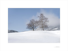 Las formas del invierno (E. Pardo) Tags: invierno winter nieve schnee formas formen forms colores colors farben árboles trees bäume paisaje landscape landschaft steiermark austria