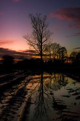 Landscape-0780 (EB_Creation) Tags: tree sunset clouds amateur amazing landscape evening water walkinginnature nature nikkor reflection reflections nikon nikond7500 nikon1680mm nikkor1680mmf284evr 1680284eifedvr 1680mm d7500 beautiful lovely naturelovers