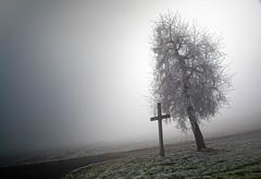 schief (andre.kirtz) Tags: kreuz aargau nebel horben januar frost schräg freiamt baum schweiz