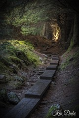 woods 1 (Ken Duke Photography) Tags: woods ireland wicklowmountains cowicklow board boardwalk light