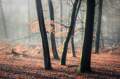 Spectrum orange (Ingeborg Ruyken) Tags: ochtend morning sunrise natuurmonumenten boxtel natuurfotografie autumn fall kampina herfst