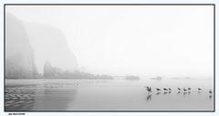 Mouettes dans la Brume.. (jmfaure29) Tags: jmfaure29 canon ciel clouds paysage plage bretagne beach brume sky seascape sea monochrome mer nature nuages nb finistère mouette