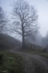 Paisaje con niebla (alfonso-tm) Tags: paisaje personas niebla fujifilmxt3 arboles fujinon1680