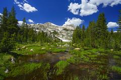 Yosemite Unicorn Skies (RobertCross1 (off and on)) Tags: a7rii alpha ca california cathedralrange emount elizabethlake fe1635mmf4zaoss highsierra ilce7rm2 sierranevada sierras sony tuolumne unicorncreek unicornpeak yosemite yosemitenationalpark bluesky clouds creek forest fullframe lake landscape mirrorless mountains nunatak snow stream trees water