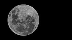 Full moon, but no lunar eclipse (N808PV-2 (aka N808PV)) Tags: m50 full moon