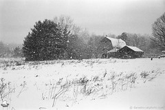 Snowstorm over Three Roofs (ZIC_0094) (masinka) Tags: etbtsy winter snow storm cold wind snowflake barn structure buffalo ny newyork orchardpark southtowns suburb rural countryside film analog blackandwhite bw monochrome zeiss ikon contessa rollei superpan 200