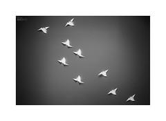 ... (ángel mateo) Tags: ángelmartínmateo ángelmateo lisboa portugal lisbon fondogris pájaros aves vuelo luz libertad graybackground birds flight light freedom papiroflexia origami