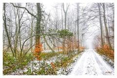la révérence (BelSoq) Tags: hiver winter forêt arbres chemin bois neige snow brume brouillard lorraine