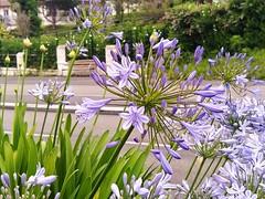 618 - Open up (AnouchkA_) Tags: anouchka paris france nature flower open purple 618 green