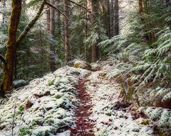 Woodland Path (Matthew James Lewis) Tags: washingtonstate washington winter aldertrees mapletrees moss olympicpeninsula olympicnationalforest oregongrape nature northwest hemlocktrees firtrees forest ferns snow landscape trees trail bigquilvalley peaceful pacificnorthwest
