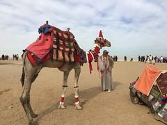 Giza Colours - The Camels (Pushapoze (MASA)) Tags: egypt egypte egitto stones pierres pietre camel pyramide giza market