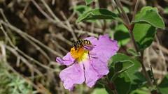 INSETTO (trexenda) Tags: insetti natura