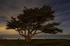 Point Pinos Tree No.3, Pacific Grove, California (rocinante11) Tags: tree night longexposure coast montereypeninsula pacificgrove california unitedstates stars ambientlight tripod