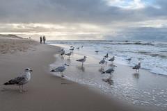 am Strand zwischen Wenningstedt und Westerland (andreas.zachmann) Tags: deu möwen meer strand himmel wasser winter menschen wolken wellen nordsee dünung wenningstedt schleswigholstein deutschland