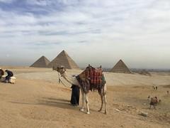 Giza Colours - The Pyramids (Pushapoze (MASA)) Tags: egypt egypte egitto stones pierres pietre camel pyramide giza market