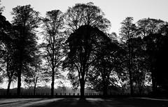 Silwét o'r coed - Caeau Llandaf (Rhisiart Hincks) Tags: coed zuhaitzak trees gwez arbres craobhan crainn silhouette silwét cysgodlun ledskeud sgàilriochd sgàildhealbh scáthchruth zilueta pontcanna caerdydd cardiff kerdiz blancinegre duagwyn gwennhadu dubhagusgeal dubhagusbán blackandwhite bw zuribeltz blancetnoir blackwhite monochrome unlliw blancoynegro zwartwit sortoghvid μαύροκαιάσπρο feketeésfehér juodairbalta citypark liorzhkêr parcyddinas parcdinesig bore mintin beure madain madainn morning mañana goiz rīts rytas hommik a'chuimrigh kembra wales cymru kembre gales galles anbhreatainbheag cysgodion itzalak skeudoù shadows ombres dubharan scáthanna