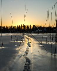 Hot bellied snake (A.Koponen) Tags: canon eosr rf24105mmf40 lseries hoya kuopio suomi finland kallavesi lake winter ice snow sunset nature frozen naturephotography luonto suomenluonto
