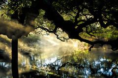 Misty Morning II (paulgarf53) Tags: