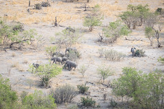 Sparse Shade for the Elephants (2) (jeff_a_goldberg) Tags: africa aerialphotography gomoti nature naturalhabitatadventures nathab jeffgoldbergphotography botswana elephant wildlife helicopter unesco wildernesssafaris aerial aerialview unescoworldheritagesite okavangodelta maun northwestdistrict