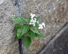 Wall Flower (1) (fotophotow) Tags: easternstatepenitentiary philadelphia