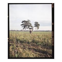 Deer stand, Bavaria, 2019 (krishna_ambient) Tags: 120mm mediumformat mamiya7ii mamiya film