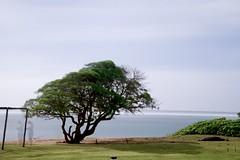 D85_0828 (mwelsch70) Tags: d850 hawaii kauai nikon nikkor longexposure seal tree ocean water clouds ghost nature