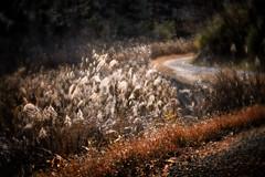 rural path (slowhand7530) Tags: leicam10p lensbaby velvet85