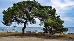 Parasol (balese13) Tags: 100nikon 1855mm arcachon d5000 gironde lavigne nikonpassion yourbestoftoday arbre balese bassin bateaux bleu blue eau green nikon nikonistes pin pixelistes plage tree vert water 500v20f 1000v40f 1500v60f flickrbestpics