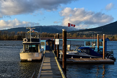 Pitt Meadows Marina/ Pitt River/ South Arm Alouette River (SonjaPetersonPh♡tography) Tags: pittmeadows pittmeadowsmarina pittriver southarmalouetteriver alouetteriverdykestrail marina nikon nikond5300 nikonafsdxnikkor18300mmf3556gedvr boats moored dock waterscape landscape viewpoint views scenic scenery river water clouds sky dykes pittriverdykes moorage gasbar bc canada britishcolumbia blackwhite