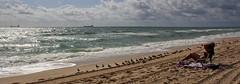 Beach View (LarryJay99 ) Tags: beacharea birds florida fortlauderdale sandy sandybeaches seagullsbeacharea shorebirds seagulls waterfrontliving surf horizon weather