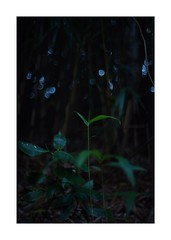 This work is 3/21 works taken on 2019/12/8 (shin ikegami) Tags: sony ilce7m2 a7ii sonycamera 50mm lomography lomoartlens newjupiter3 tokyo 単焦点 iso800 ndfilter light shadow 自然 nature naturephotography 玉ボケ bokeh depthoffield art artphotography japan earth asia portrait portraitphotography