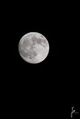 Full moon (jannaheli) Tags: suomi finland winter light moon nature night helsinki fullmoon wintertime darksky arabianranta naturephotography naturelight naturetherapy