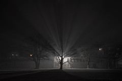 Halo (Christoph Wenzel) Tags: nacht deutschland baum sonyalpha7riii thüringen silvester neuhausamrennweg bw dunkelheit tamron2875mmf28diiiirx blackandwhite