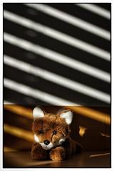 Foxi in light stripes (xockisfriends) Tags: foxi fox foxile diagonal stripes fuchs light shadows camouflage animal student gwandäphysik intelligence intelligent einser hochbegabt portrait véranda