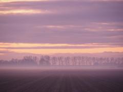 Purple haze (Hans & Liek) Tags: nederland netherlands friesland sunset zonsondergang polder countryside platteland