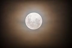 Glowing full moon in a smoky hazy night sky (Merrillie) Tags: glow lunarcycle hazy astronomicalbody bushfiresmoke glowing naturalsatellite moon planetary astro haze astrology smoky sky satellite rising solarsystem dark night nature fullmoon moonphases nighttime luna lunar light