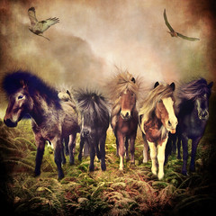 The Storm Trackers (larwbuck) Tags: birds animals artistic clouds composite effects fantasy ferns horses outdoors painterly textures