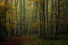 Walking in the woods. (Christine Padmore) Tags: atmospheric moody dark woodland landscape british nature autumn woods tress