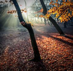 How to decorate a tree (Ingeborg Ruyken) Tags: ochtend morning sunrise 500pxs natuurmonumenten boxtel natuurfotografie autumn fall kampina herfst