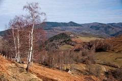 La Soumère (Ariège) (PierreG_09) Tags: ariège pyrénées pirineos couserans lasoumère sentenacdoust montagne bouleau