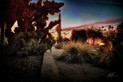 Phoenix – a winter sunset (—TPatt—) Tags: sunset phoenix arizona saguarocactus desertsucculents palmtrees thomaspatterson tpatt trolled