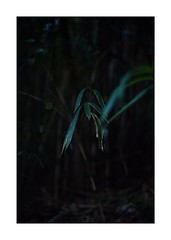 This work is 2/21 works taken on 2019/12/8 (shin ikegami) Tags: sony ilce7m2 a7ii sonycamera 50mm lomography lomoartlens newjupiter3 tokyo 単焦点 iso800 ndfilter light shadow 自然 nature naturephotography 玉ボケ bokeh depthoffield art artphotography japan earth asia portrait portraitphotography