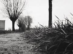 42 (J.C. Moyer) Tags: natuurfotografienoir naturephotographynoir holland thenetherlands volendam edam lumix025 lumixgx80 hh025 dmcgx80 panasonic lumix pad path flat bomen trees gras grass zwartwit blackandwhite 42
