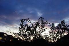 IMGP5566 (Steve Guess) Tags: chessington surrey greater london england gb uk sky cloud