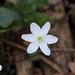 Març_030038