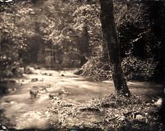 Source de l'Allondon, pays de Gex († Nicolas Blind †) Tags: collodion wet plate alternative process wetplatecollodion ambrotype nature landscape gex paysdegex paysage france